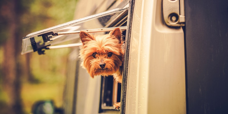 Camping with dog – with these tips the journey becomes a safe and relaxed pleasure.